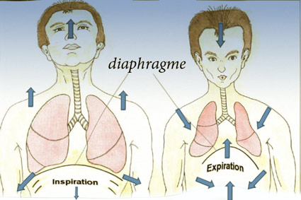 Récapitulation simplifiée: apnée expiratoire Creux0